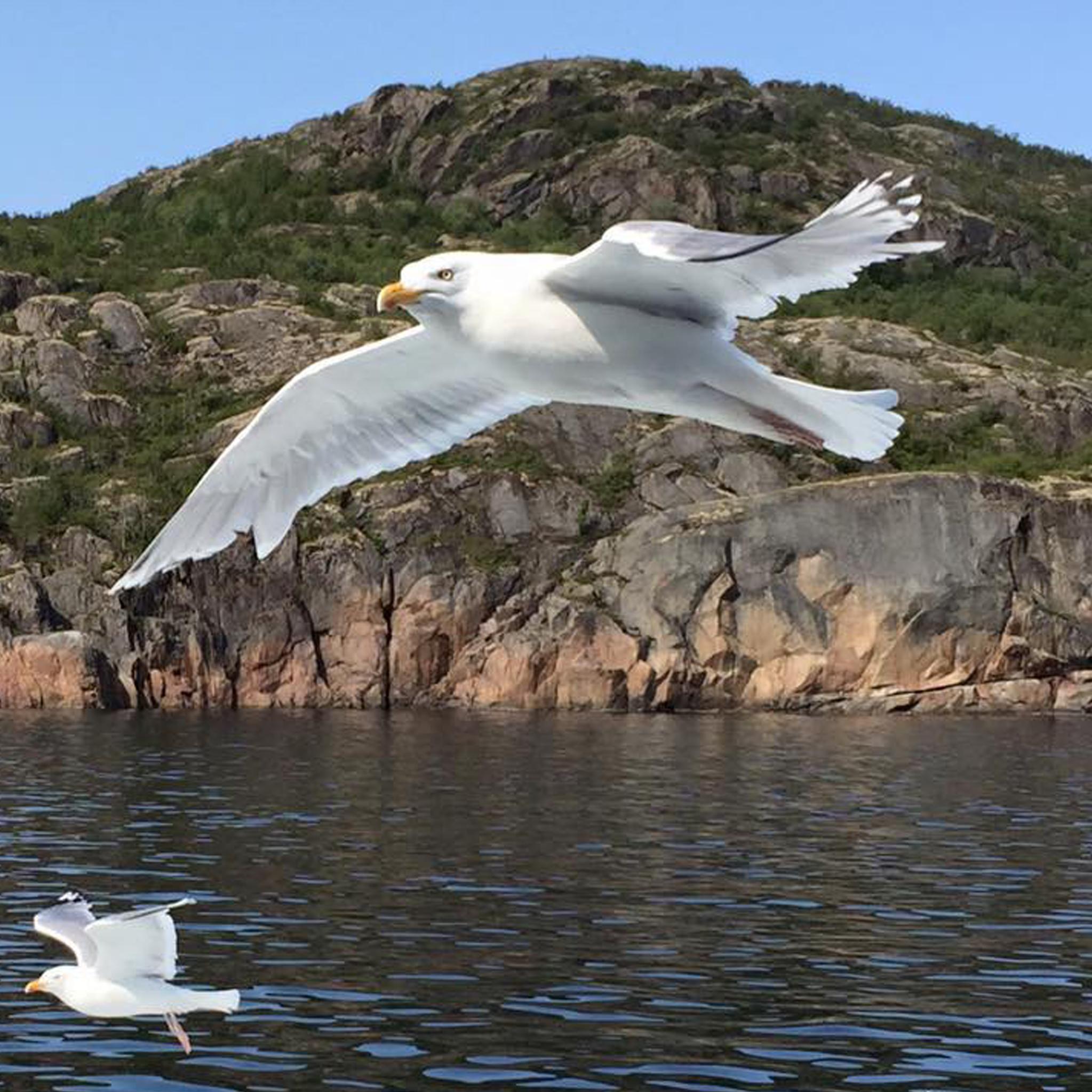 flyg fri som fågeln